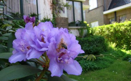 Petite fleur mauve a une visite