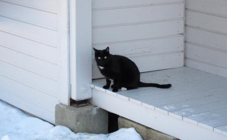 Chat noir sur fond blanc