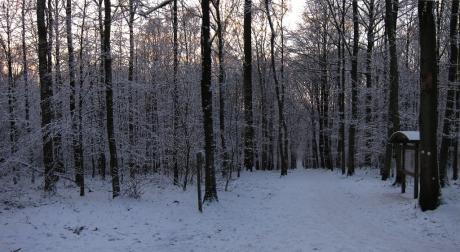 Petit matin sous la neige