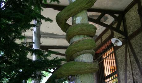 Serpent végétal