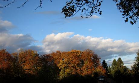 Ciel d'automne sur la forêt