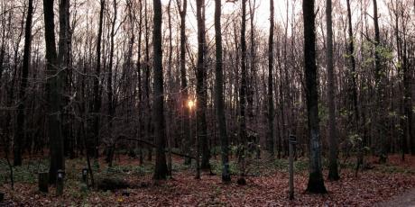 Aurore forestière