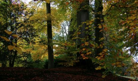 Dans la famille automne, je demande le sous-bois