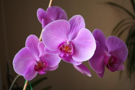 Orchidée pas si sauvage