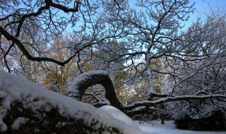 La pieuvre végétale sous la neige